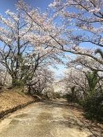 円座デイ 花見写真2.jpg